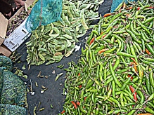These chillies are sold at a small vegetable stand in a parking lot. Piles and piles of chillies.