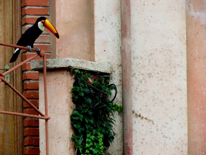 The mascot of the Monte Bird Gardens - the Toucan. The Toucan is not big on flying, they prefer to hop from branch to branch - or in this case railing to windowsill.
