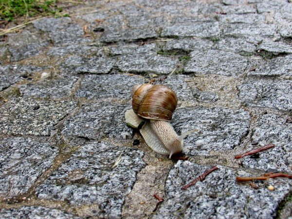 The snails sure do love the rainy weather