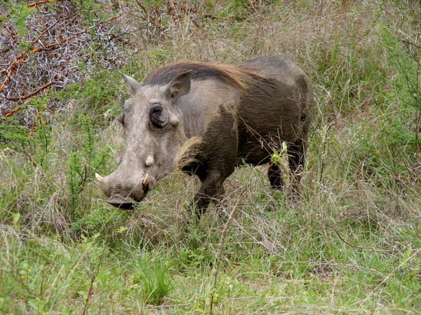 This warthog looked like such a rockstar.