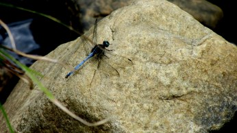 Pretty dragonfly fluttering around the pond