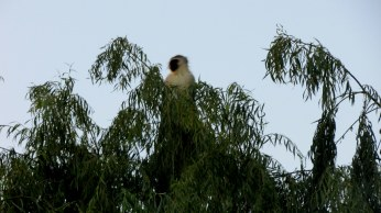 This cheeky guy peeked out of the top of the trees