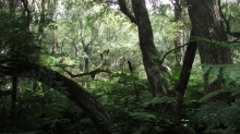 Trees in the Knysna Forest