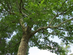 A shady tree to snooze under