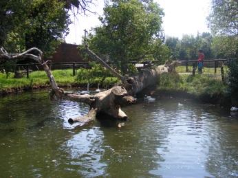 Irene Pond
